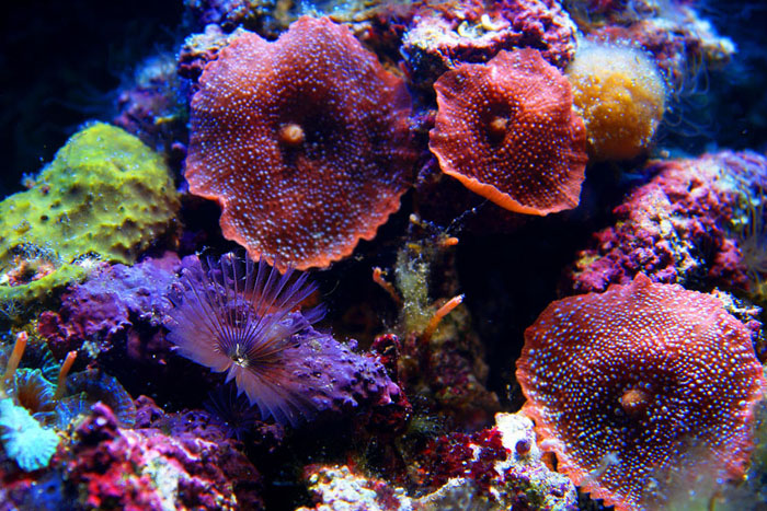 marine life, worms, red, purple, underwater