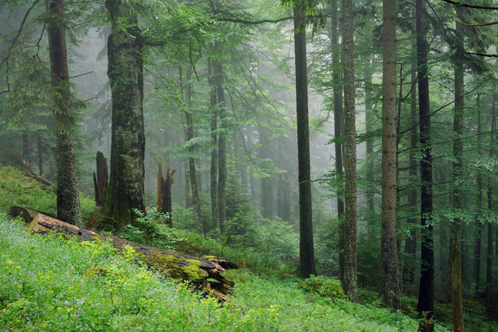 Piatra Craiului National Park, summer, virgin forest, green, fog, mist, landscapes