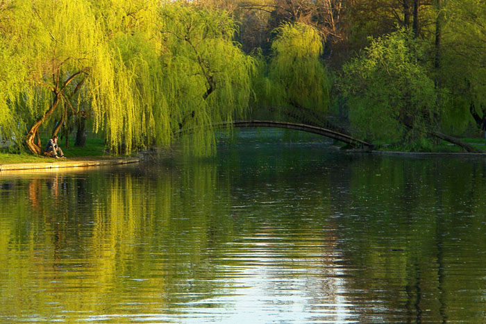 Tineretului Park, spring, lake, green yellow, landscapes
